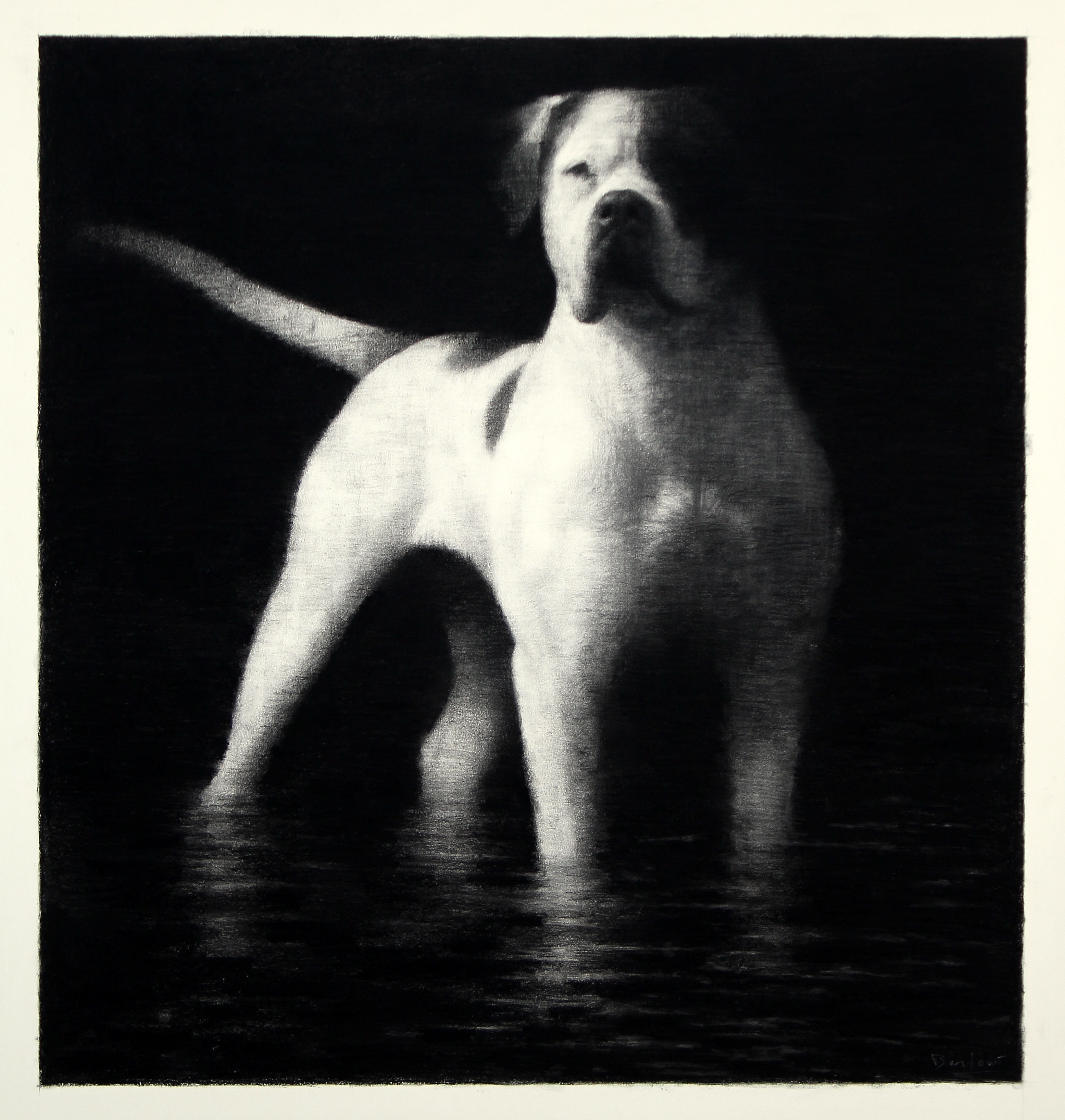 The Dog and Its Reflection charcoal on paper, 80 x 85cm copy 2
